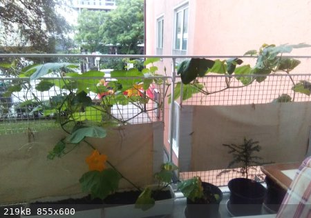Balkon-1.jpg - 219kB