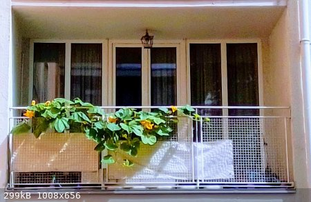 Balkon-4.jpg - 299kB